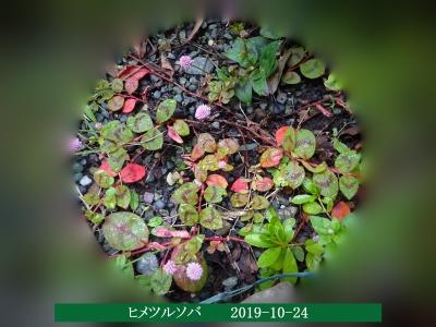 20191024-koyo5aniwa
