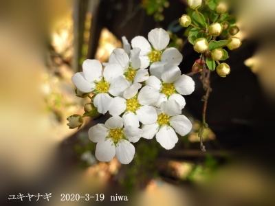 20200319-niwa