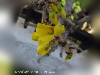 20200319-niwa_20200324194101