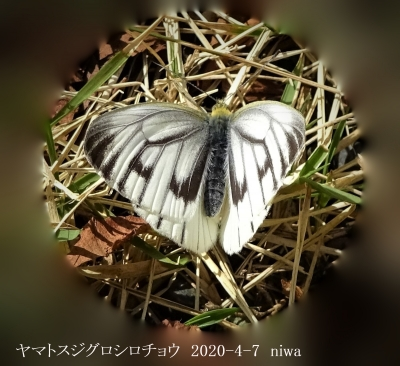 20200407-niwa