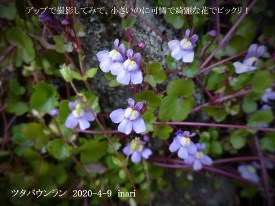 20200409-inari