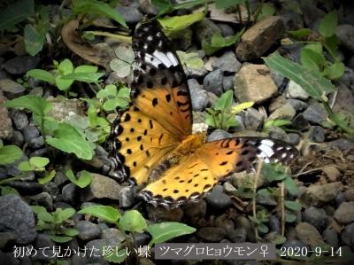 20200914-niwa