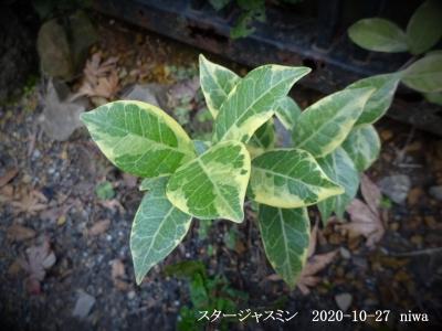 20201027-2-niwa