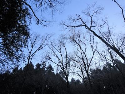 20210129-wood1